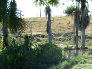 Exemplo de Área de Preservação Permanente desmatada que pode ser recuperada com nova regra