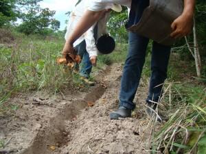 Projeto irá trabalhar com agroflorestas