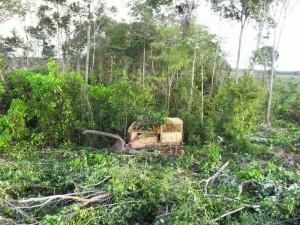 Trator flagrado derrubando floresta na região norte de Mato Grosso durante operação do Ibamam em 2014. Foto: Ibama-MT