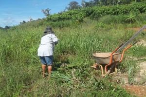Agricultores do PA Nova Cotriguaçu fornecerão alimentos à merenda da escola do campo. Foto: Sucena Shkrada Resk/ICV