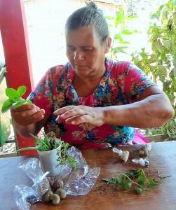 A agricultora familiar Gercina acha importante difundir o conhecimento das sementes crioulas aos jovens. Foto: Sucena Shkrada Resk/ICV