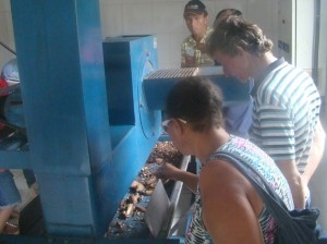 Agricultores observaram cada etapa do processamento da castanha. Foto: Sucena Shkrada Resk/ICV