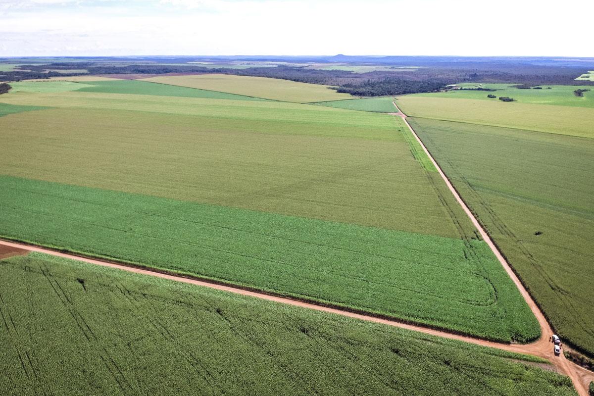 Desmatamento segue como vilão do clima no Brasil e em Mato Grosso Método de análise brasileiro é destaque em revista internacional
