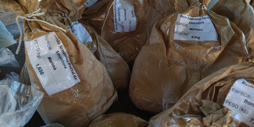 A imagem mostra vários sacos(pardos) de sementes de diversas espécies.