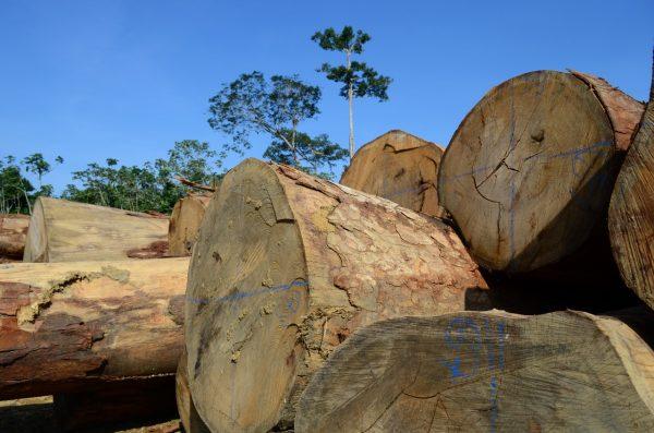 Desmatamento em MT